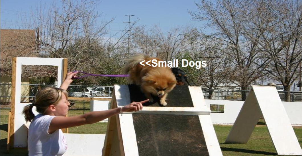dog-train9